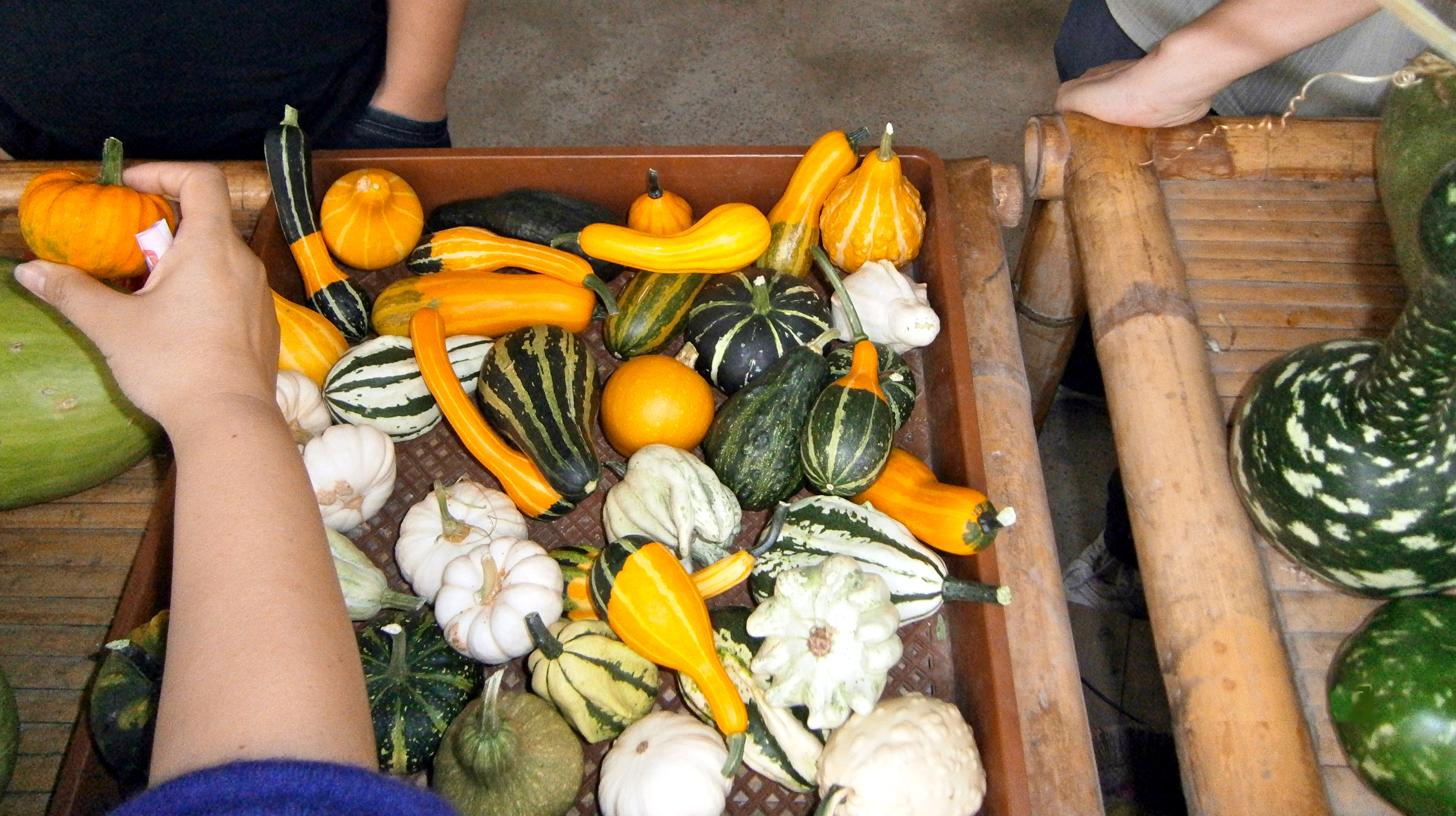 selection of gourds